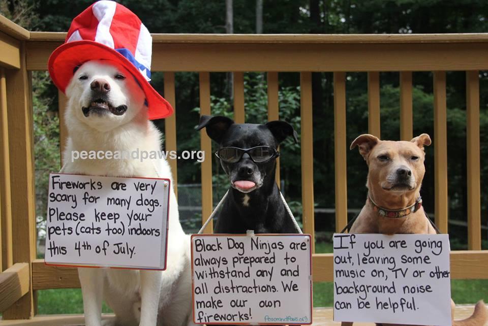 Seattle Dog Park Th