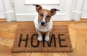 Renting-with-Pets_2